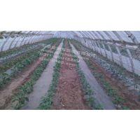 滴灌带的几种形式 河北地区批发供应 迪龙塑胶