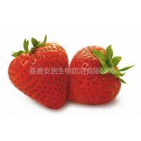 供应新鲜草莓