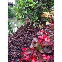 园林景观覆盖物-果壳类,颜色深搭配亮色植物美观