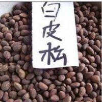 白皮松苗木白皮松种子当年新采摘优质白皮松种子白皮松籽
