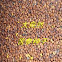 厂家供应中草药材种子庭院种植质量保证高效益精选优质苦参种子