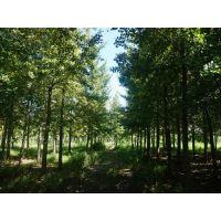 庭院景观绿化,石家庄银杏树,绿都园林(在线咨询)