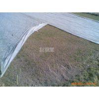 供应优质草坪