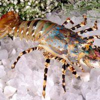 西班牙红虾进口报关/所有单证有哪些?