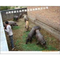 特种动物养殖场/纯种野猪养殖