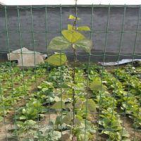 攀爬类植物支撑网墙 套胶方孔围网 防脱落专用铁丝网