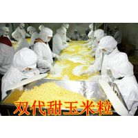 大量供应罐头、水饺、八宝粥等专用金银华妃甜玉米粒