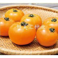 供应橙色水果番茄种子——奈美