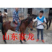 养殖牛羊驴出售牛羊驴山东牛羊驴养殖场
