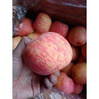 红富士苹果 水晶红富士苹果 纸袋红富士苹果