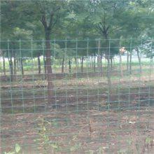 的圈地铁丝网 农场圈山浸塑荷兰网 果园围挡围栏网