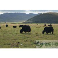 牦牛肉厂家、藏御源、四川特产牦牛肉厂家