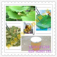 荷叶提取物 荷叶碱 植物提取物