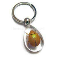 厂家热销 水晶透明昆虫琥珀钥匙扣 真实昆虫生动自然 畅销全球