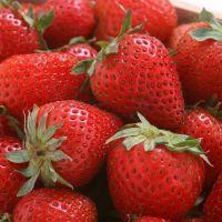 可口大草莓,优质燕香草莓苗,酸甜可口。