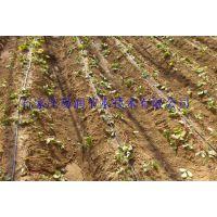 四川泸州市荔枝滴灌设备|果树滴灌节水设备质量好
