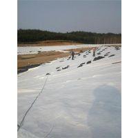 登封排水板、车库顶板排水板、蓄排水板价格