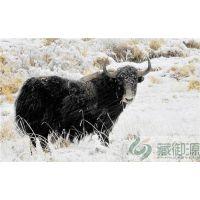 藏御源牦牛肉礼盒(在线咨询)|冰鲜牦牛肉|高原冰鲜牦牛肉