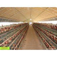 养殖棚建造 钢架大棚13920286607