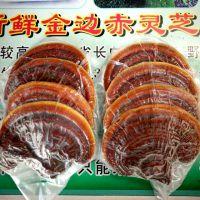 产地直销 新鲜赤灵芝富硒整枝有机天然灵芝 灵芝孢子粉养生滋补品