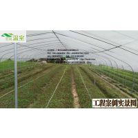 供应汕头蔬菜大棚FC-020、蔬菜大棚厂家、芳诚温室--18988967562