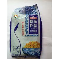 现货批发供应 玉米种子p型郑单958 厂家直供批发玉米种子