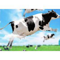 青岛进口牛奶、奶制品清关代理公司