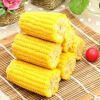 厂家直销 玉米棒 绿色安全无毒美味B级玉米棒大量批发 粒大饱满