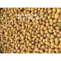 青岛日照港进口转基因大豆代理大量供应 原生态 美国2号进口大豆高蛋白 高含油