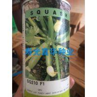 进口早熟高产西葫芦种子-SQ210