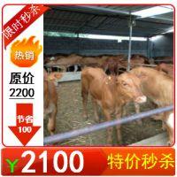 鲁西黄牛养殖技术,鲁西黄牛育肥期饲养管理技术