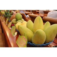 海南金煌芒   芒果王  三亚空运 海南水果特产 支持微商一件代发