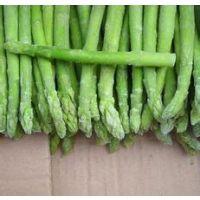 荷兰进口杰里姆-高产芦笋种子