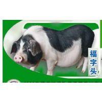 湖南宁乡优良猪肉肉质鲜美厂家销售