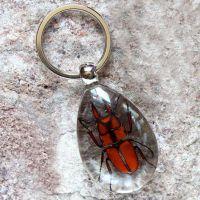 厂家批发水滴型透明琥珀昆虫钥匙扣 新奇特创意钥匙扣 旅游纪念品