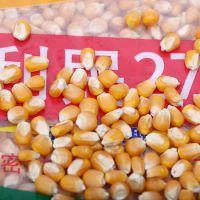 新型优质高产早熟玉米种子 利民27 粮食公司批发供应 4200粒