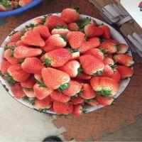 丰香草莓苗,菏泽草莓苗,高成活率草莓苗