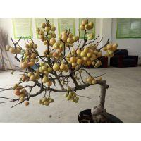 各种海棠盆景供应,冬红海棠盆景供应