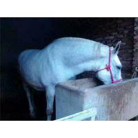 肉马|万隆畜牧养殖|肉马养殖场