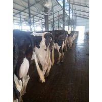 泰和 TH 牛舍悬挂式风机 质优价廉 排风扇 温控设备 畜牧养殖