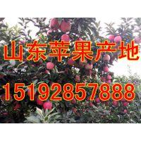 沂水县起伟果蔬种植专业合作社
