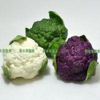 厂家直销仿真蔬菜模型 仿真PU西兰花 绿色 仿真白花菜 紫甘兰花