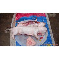供应竹鼠,商品肉鼠,冻竹鼠