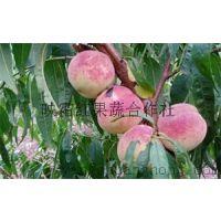芜湖镜湖映雪红桃树苗多少钱?安徽映霜红桃苗果蔬合作告诉你价格