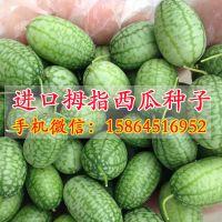 拇指黄瓜种子 拇指西瓜种植批发 一口西瓜 瓜果种子 蔬菜种子