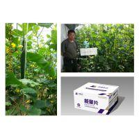 芸苔素内酯原药在黄瓜作物上的应用