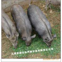 [野猪养殖基地长年优价提商品野猪]  纯种野猪种苗