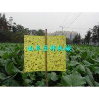 圣邦新型高效果园杀虫粘板 黄色诱虫高效双面粘虫板