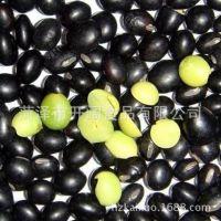 青仁乌豆,黑豆,各常规规格7-8mm,8.0up,专业挑选,出口级标准