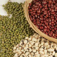 东北有机绿豆 淼谷牌天然无污染 非转基因 特色农家杂粮自产自销